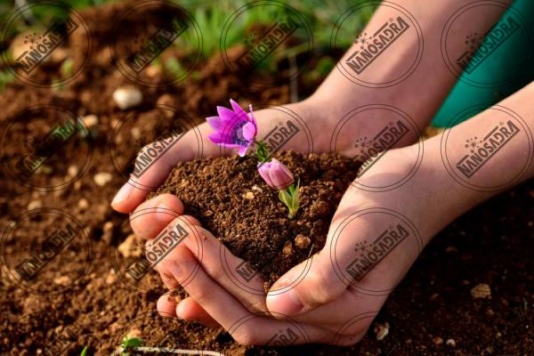 Best nano fertilizer brands 2019